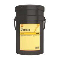 Shell Gadinia Jungent